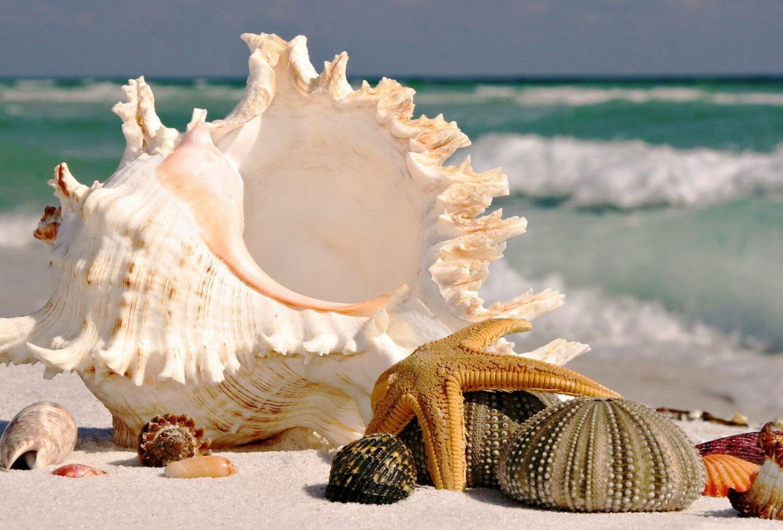 Пазл море и ракушки (лето, море, пляж) - разгадать онлайн из раздела